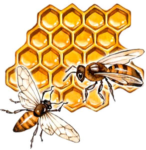 Пчелиная перга для молодости и красоты кожи