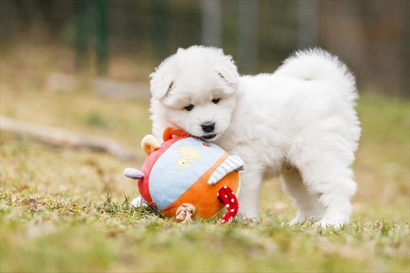 Дрессируем щенка: советы начинающим