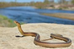 Укусы змей: как оказать первую помощь