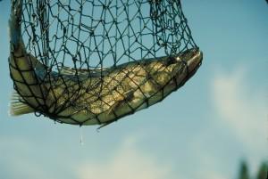 Как выбирать, разделывать и готовить рыбу: полезные советы