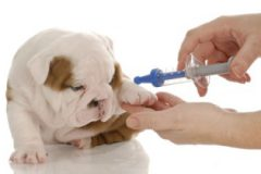 Анемия у собак: как спасти хвостатого друга?