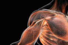 Что такое мышечная сила? Её виды