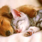 Собака и кот в одном доме