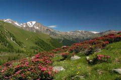 Альпийские национальные парки