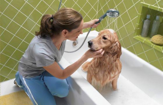 Как нужно заботиться о собаке