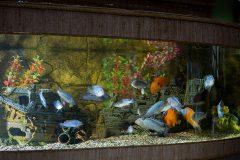Профессиональная чистка аквариумов в СПб