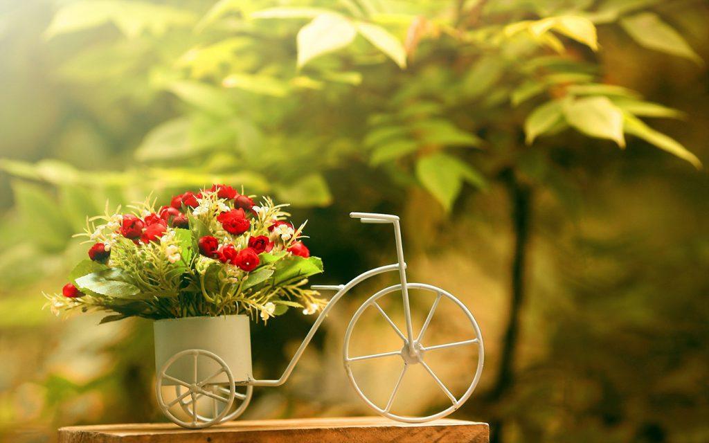 Красивое решение для лучшего подарка — доставка цветов в Ивано-Франковске