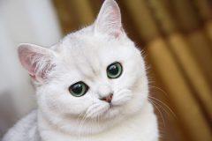 Стоит ли заводить кошку или кота?