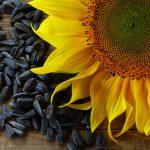 У семечек есть полезные свойства, о которых мало кто знает