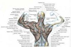 Упражнения, воздействующие на основные группы мышц