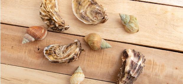 Какая рыба и морепродукты укрепляют иммунитет?
