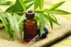 Эфирное масло чайного дерева: свойства и применение